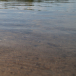 Immer weniger Fische im Bodensee