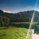 Weinwirtschaft: Gute Weine, schwieriger Markt