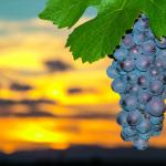 Strukturwandel im Weinbau geht weiter