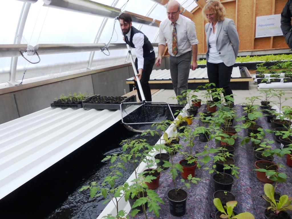 Mit Unterstützung durch den Badenova Innovationsfonds wurden bereits 237 Pilotvorhaben umgesetzt – darunter auch das Aquaponische Gewächshaus in Neuenburg, welches Pflanzen- und Fischzucht auf Basis Erneuerbarer Energien kombiniert. Foto: badenova