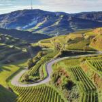 Badische Wein GmbH: Mehr als nur von der Sonne verwöhnt