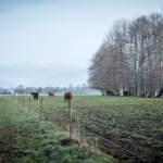 Landwirtschaft: Kein schöner Land