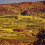 Wein und Architektur: Am Kaiserstuhl investieren Winzer in ganzheitliches Marketing