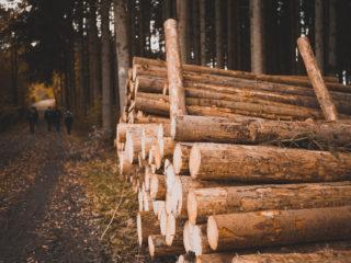 Holzwirtschaft in Südbaden